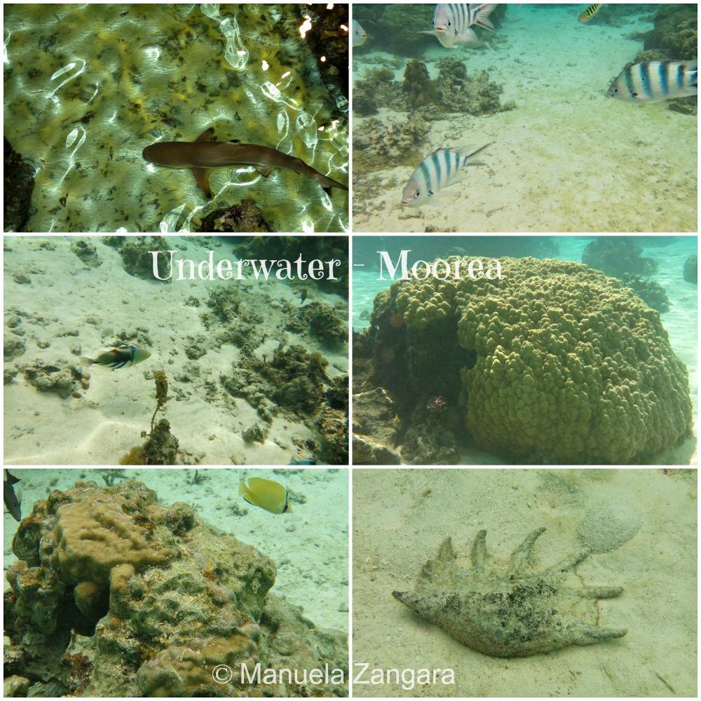 M Underwater 1