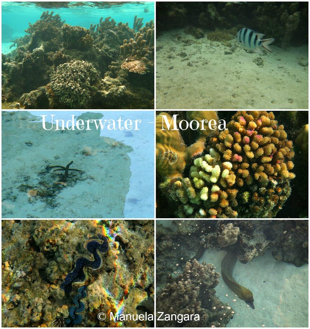 M Underwater 2