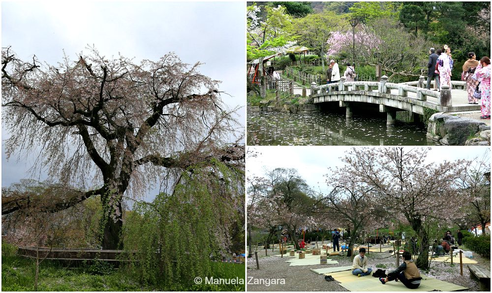 Maruyama Park - Kyoto