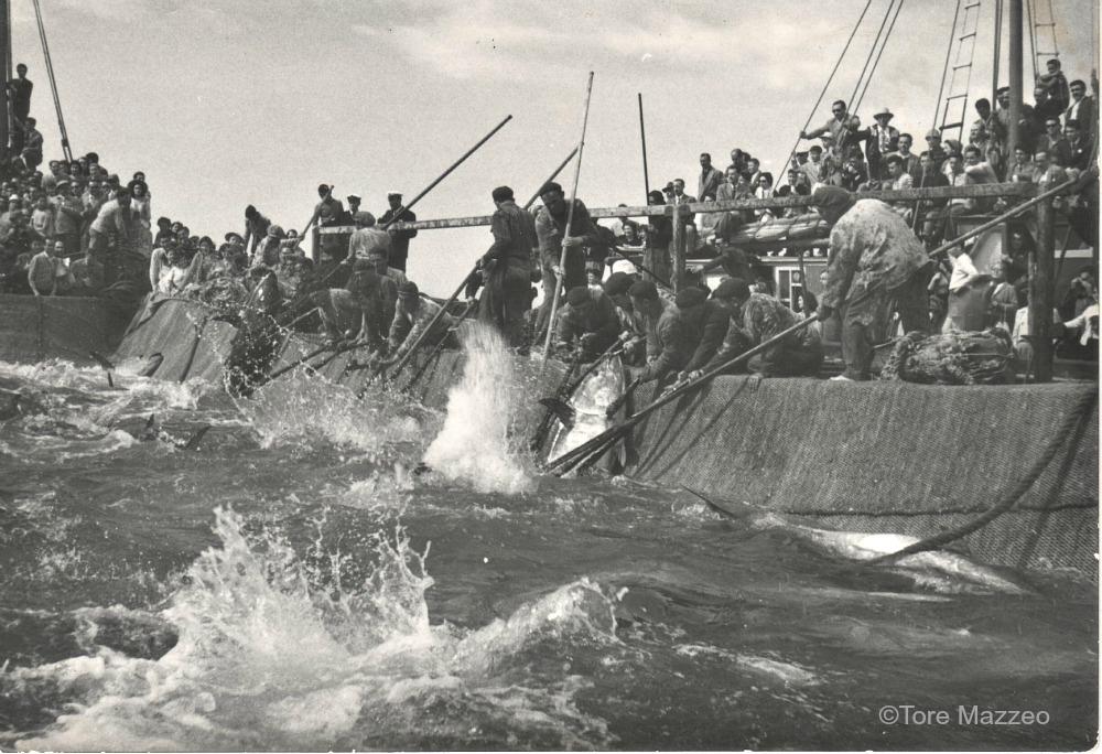 1a Favignana mattanza 1950