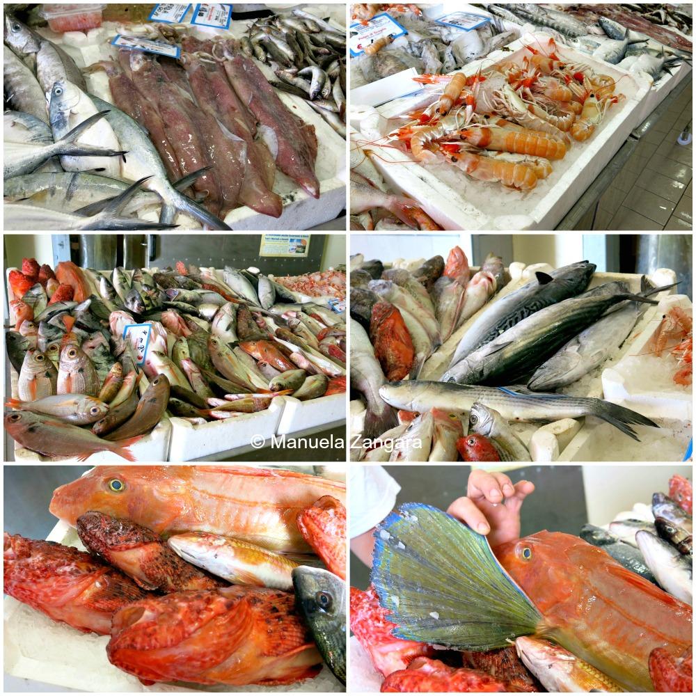 PicMonkey Collage fish billeci