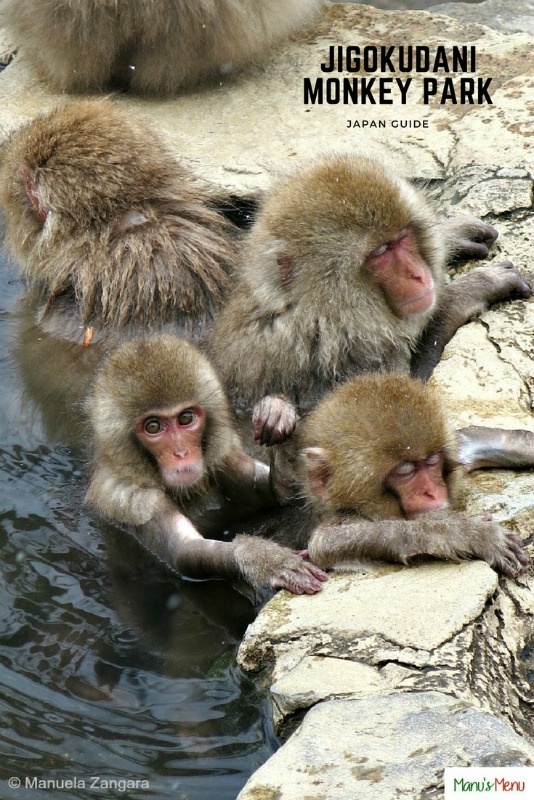 Jigokudani Monkey Park Guide – Japan
